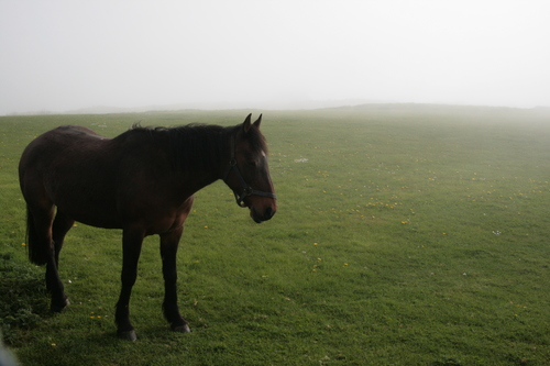[Picture: Horse 6]