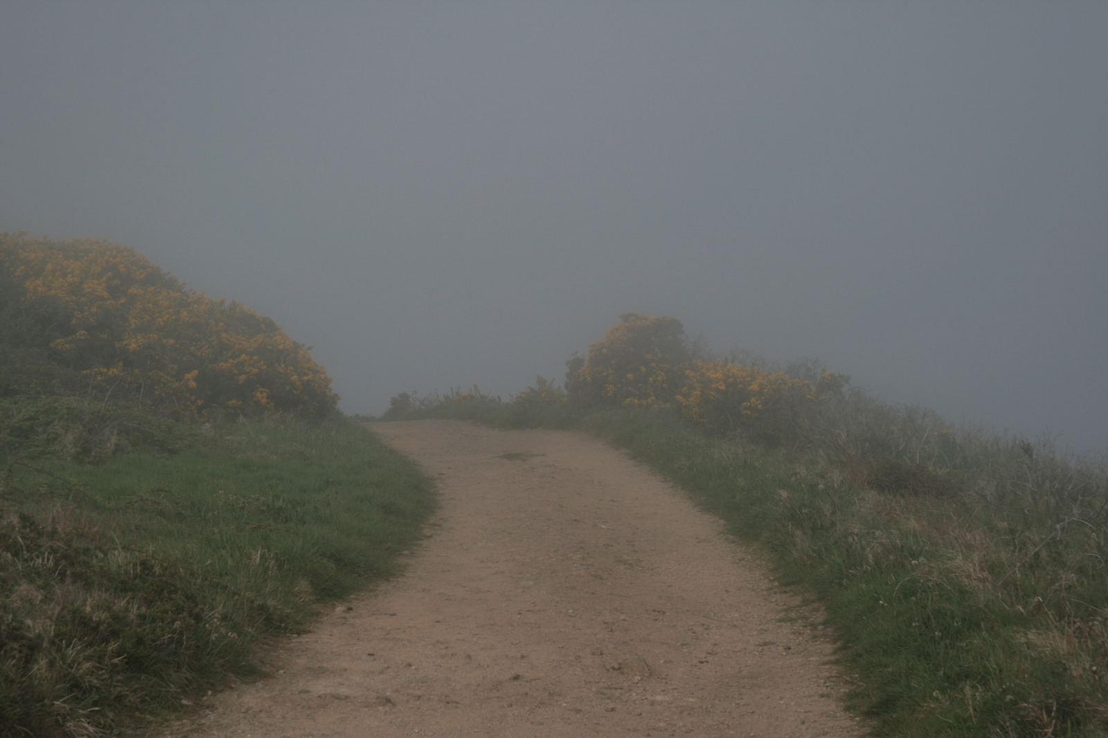 [Picture: Path through the mist 2]