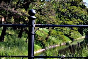 [picture: iron fence]