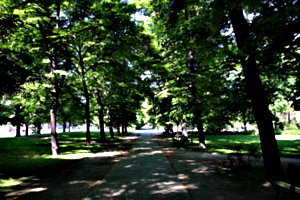 [picture: A Walk in the Park 1]