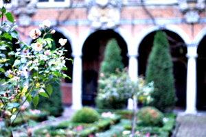 [picture: Autumn Rose]