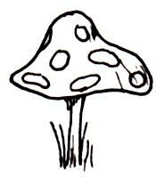 [picture: Toadstool for an elf.]