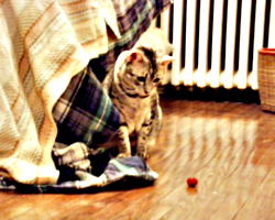 [picture: Cosmos likes to play with this cat-toy. (Copyright CatamountClyde Studios 2001)]